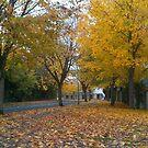 Autumn road by DES PALMER