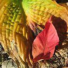 Fall Colors by brendalynn52
