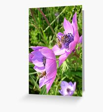 Honey Bees Feeding On  Pink Anemone Flower Blossom Greeting Card