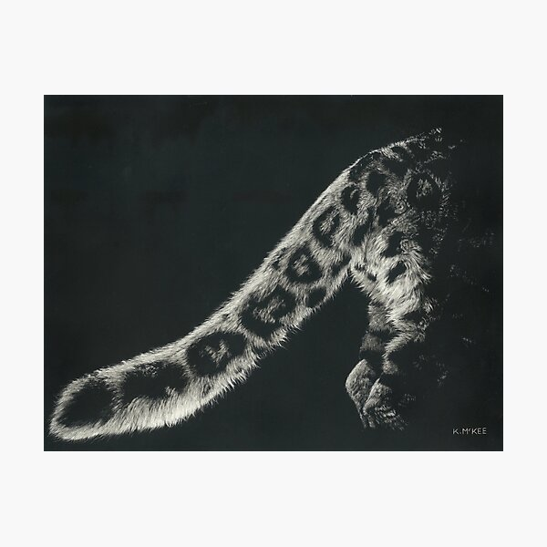 Snow Leopard Tail Photographic Print