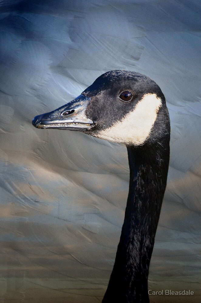 Canada Goose by Carol Bleasdale