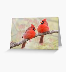 Crimson Powder Puffs Greeting Card