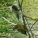 Two Morning Doves Abstract Impressionism by pjwuebker