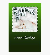 Mistletoe, The Silver Shaded Chinchilla Christmas Card Photographic Print