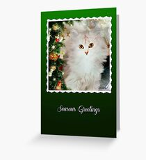 Chinchilla cat christmas greeting cards redbubble mistletoe the silver shaded chinchilla christmas card greeting card m4hsunfo