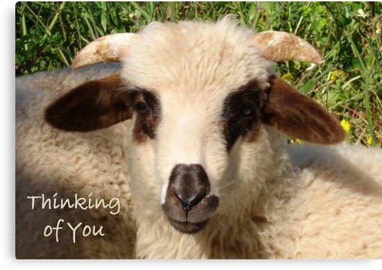 Ewe Portrait With Thinking of You Greeting by taiche