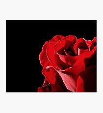 Red Rose Photographic Print