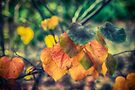 Autumn leaves by Raymond Warren