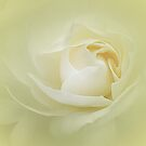 Creamy Soft Yellow Manipulated Rose by edesigns14