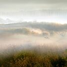 Morning Fog by Igor Zenin
