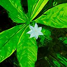 Star Flower Abstract Impressionist by pjwuebker