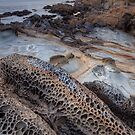 Nature Works 2014 by Vincent James