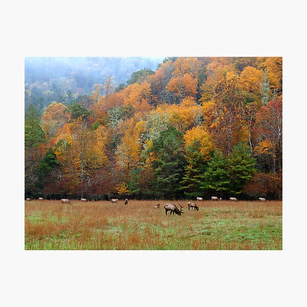 autumn in the valley of the elk Photographic Print