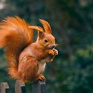 Squirrel Monroe by seawhisper