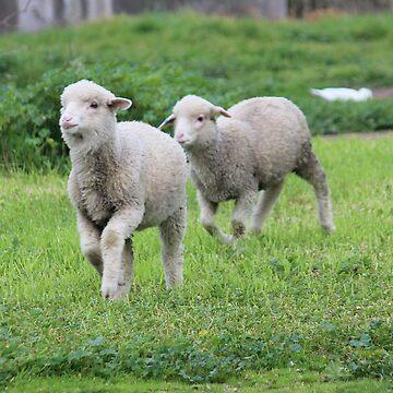 Playful pet lambs by hartlandangel