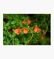 Coral Bells  Photographic Print