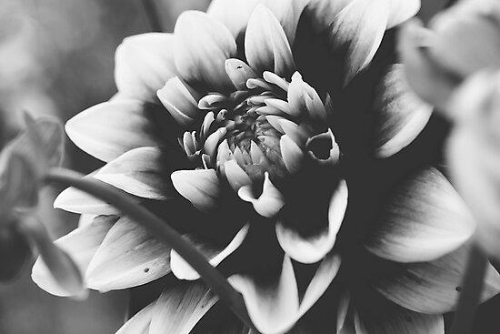 Flower by Alex Volkoff