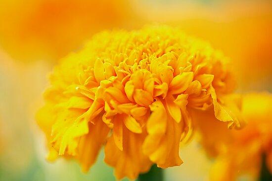 Yellow flower by Alex Volkoff