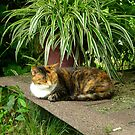 Skittles, a Calico Kitty by Vivian Eagleson