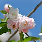 Spring Blossom 10 by Alison Hill