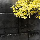 Yellow leaves on an ancient brick wall in Paris by OlivierImages