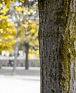 Yellow trunk and leaves by OlivierImages