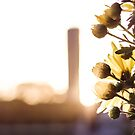 Flower in the sun by OlivierImages