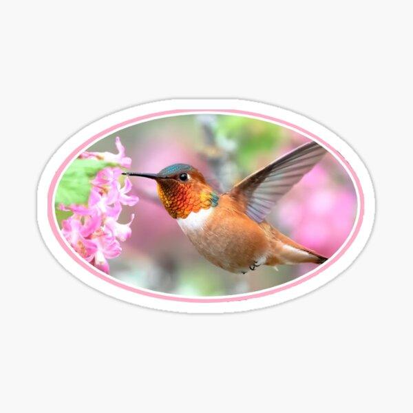 PINK HUMMINGBIRD Sticker