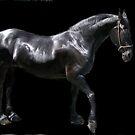 friesian HORSE~~  (dedicated to Ann E Chapman) by Sassafras