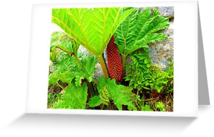 The Plant Life Of West Donegal by Fara