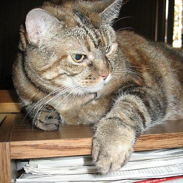 Cat on a Bookshelf by donnagrayson