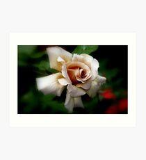 """""""Julia's Rose"""" Art Print"""