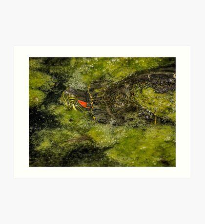 Mossy camouflage Kunstdruck