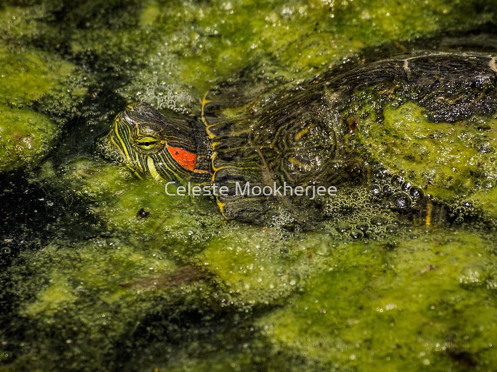 Mossy camouflage von Celeste Mookherjee