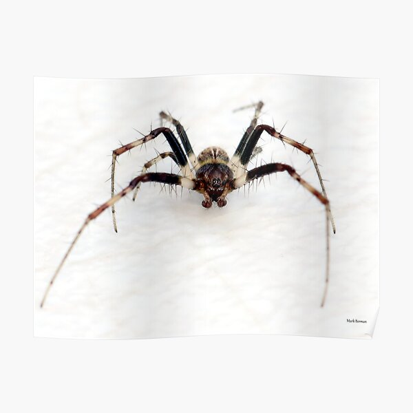 Small spider - BIG BUG-FACE! Poster