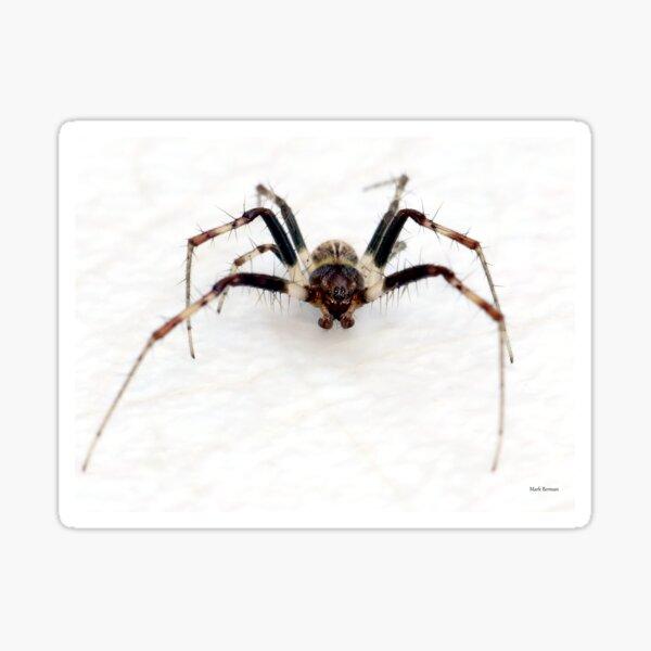 Small spider - BIG BUG-FACE! Sticker