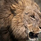 Lion by Andrew Lawrence