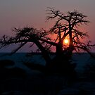 Botswana By Andrew by Andrew Lawrence