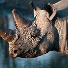 Black Rhino, Karma Rhino Sanctuary, Botswana by Andrew Lawrence