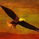 Eagle Spirit by Deborah  Benoit