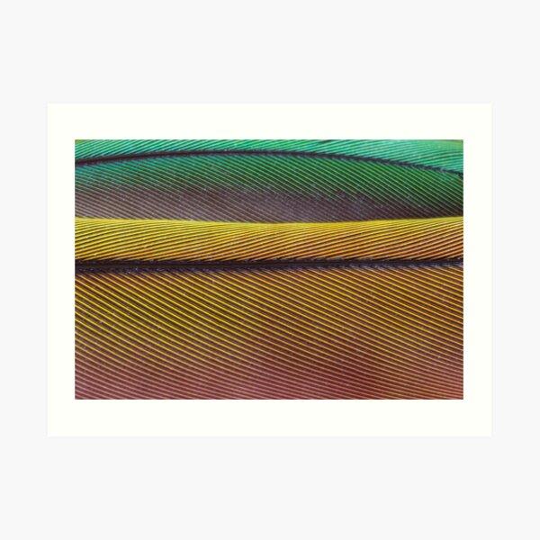 Feather Dunes Art Print