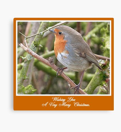Robin in Hedge at Garstang, Lancashire, Canvas Print