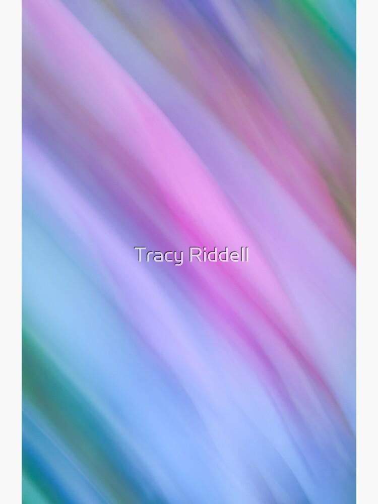 Fuchsia by taos