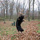 Jumping Bella by Veronica Schultz
