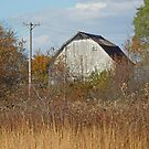 This Old Barn  by mnkreations
