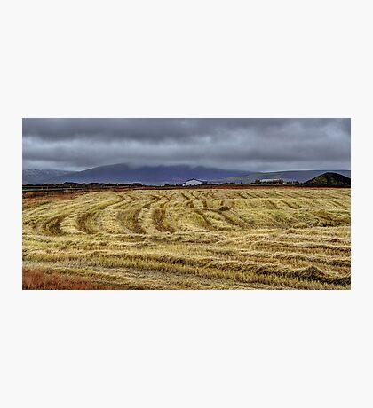 Icelandic Field Photographic Print