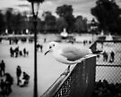 Perched seagull looking down at people in Jardin des Tuileries, Paris by OlivierImages