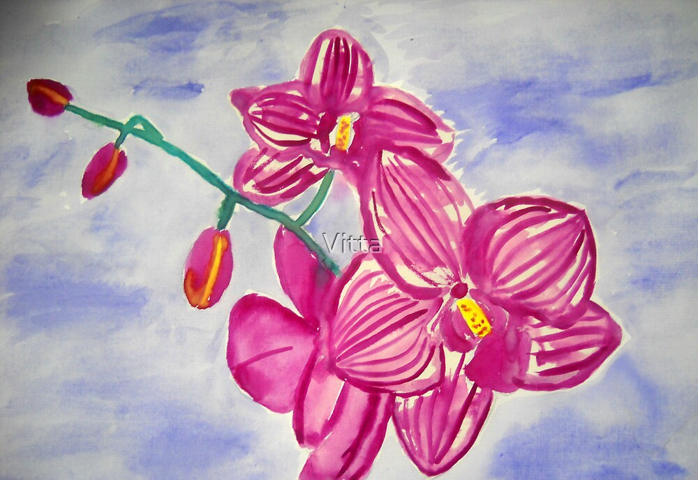 Orchids by Vitta