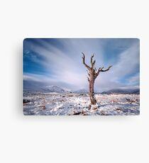 Rannoch moor tree Canvas Print