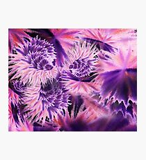 Abstract Purple Flowers Photographic Print